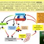 Лептин — главный гормон и регулятор энергетического обмена