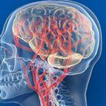 Мозговое кровообращение – это нужно знать