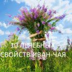 10 ИНТЕРЕСНЫХ ФАКТОВ ПРО ИВАН-ЧАЙ