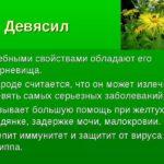 Девясил –  даёт девять сил