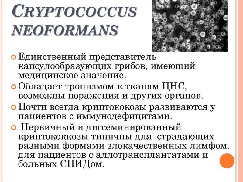 Криптококкоз