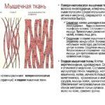 Мышцы – мифы и реальность